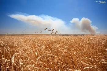 Crop fields - foto di djniks