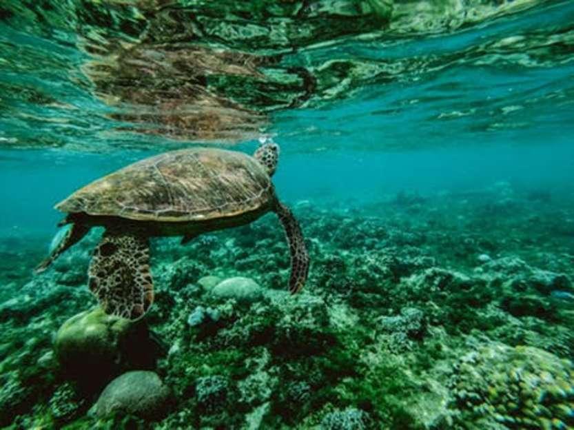 Bioeconomia marina
