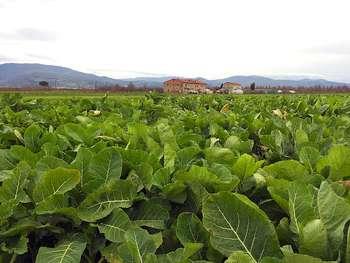 Agricoltura - Photo credit: akiragiulia da Pixabay