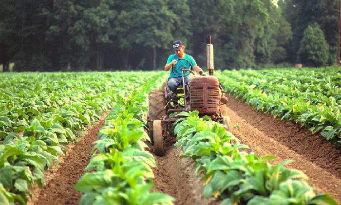 Bando giovani agricoltori - Emilia-Romagna