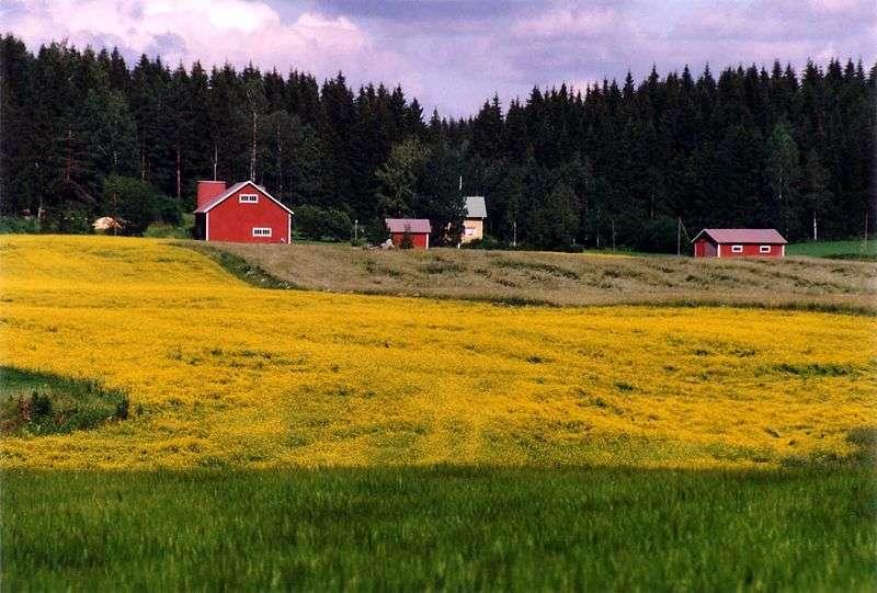 campo - autore: Petritap